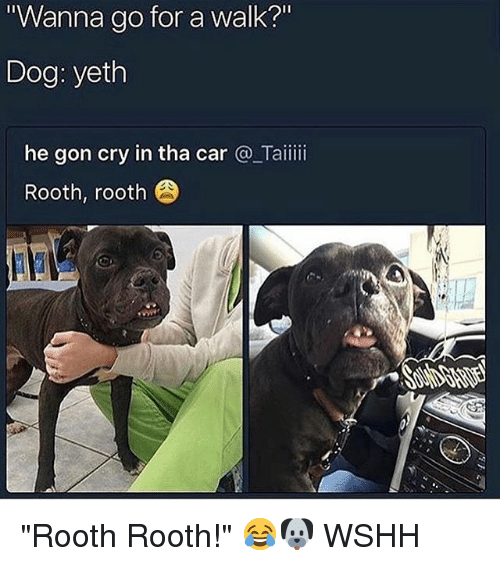 """Wanna Go For A Walk: Wanna go for a walk?""""  Dog: yeth  he gon cry in tha car @_Taiiii  Rooth, rooth """"Rooth Rooth!"""" 😂🐶 WSHH"""
