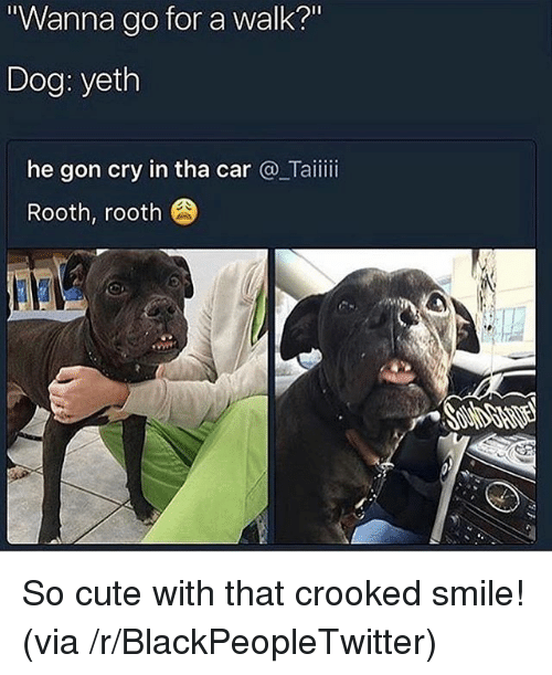 "Blackpeopletwitter, Cute, and Smile: Wanna go for a walk?""  Dog: yeth  he gon cry in tha car @_Taiii  Rooth, rooth So cute with that crooked smile! (via /r/BlackPeopleTwitter)"