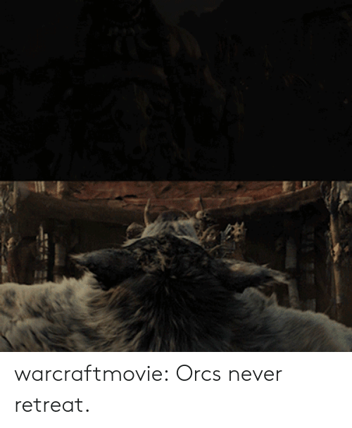 Tumblr, Blog, and Never: warcraftmovie:  Orcs never retreat.