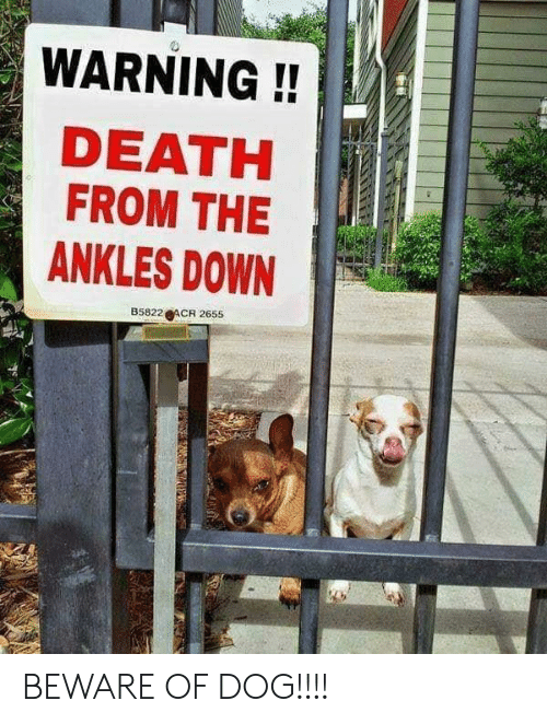 Death, Dog, and Down: WARNING!!  DEATH  FROM THE  ANKLES DOWN  B5822 ACR 2655 BEWARE OF DOG!!!!