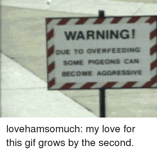 Gif, Love, and Target: WARNING!  DuE TO OVERFEEDING  SOME PIGEONS CAN  BECOME AGGRESSIVE lovehamsomuch: my love for this gif grows by the second.