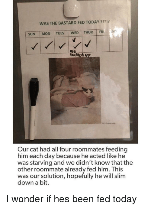 Roommate, Today, and Wonder: WAS THE BASTARD FED TODAY ?1?!?  SUN | MON | TUES WED | THUR I FRİ  Our cat had all four roommates feeding  him each day because he acted like he  was starving and we didn't know that the  other roommate already fed him. This  was our solution, hopefully he will slim  down a bit. I wonder if hes been fed today