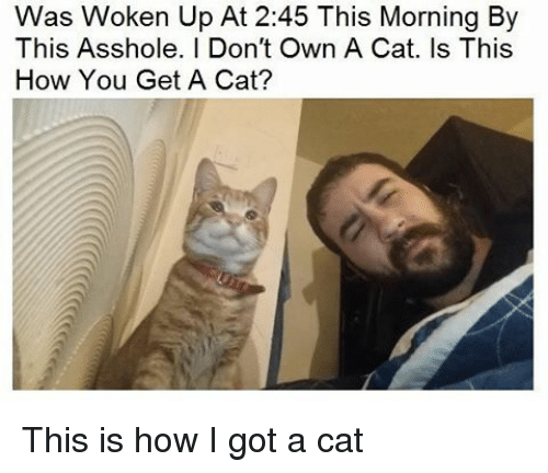 Assholism: Was Woken Up At 2:45 This Morning By  This Asshole. I Don't Own A Cat. Is This  How You Get A Cat? This is how I got a cat