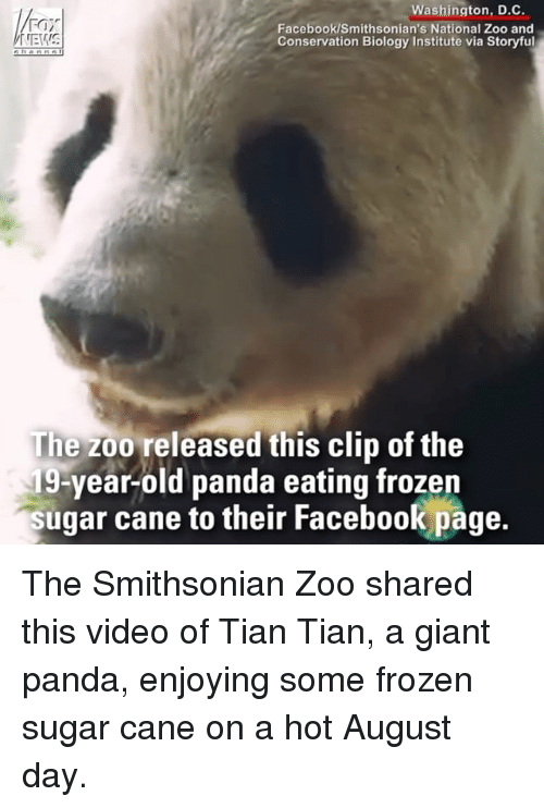 giant panda: Washington, D.C.  Facebook/Smithsonian's National Zoo and  Conservation Biology Institute via Storyful  The zoo released this clip of the  19-year-old panda eating frozen  sugar cane to their Facebook page.  their Facebook page The Smithsonian Zoo shared this video of Tian Tian, a giant panda, enjoying some frozen sugar cane on a hot August day.