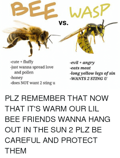 eating meat: WASP  VS.  -cute fluffy  -evil angry  -just wanna spread love  -eats meat  and pollen  -long yellow legs of sin  -honey  WANTS 2 STING U  -does NOT want 2 sting u PLZ REMEMBER THAT NOW THAT IT'S WARM OUR LIL BEE FRIENDS WANNA HANG OUT IN THE SUN 2 PLZ BE CAREFUL AND PROTECT THEM