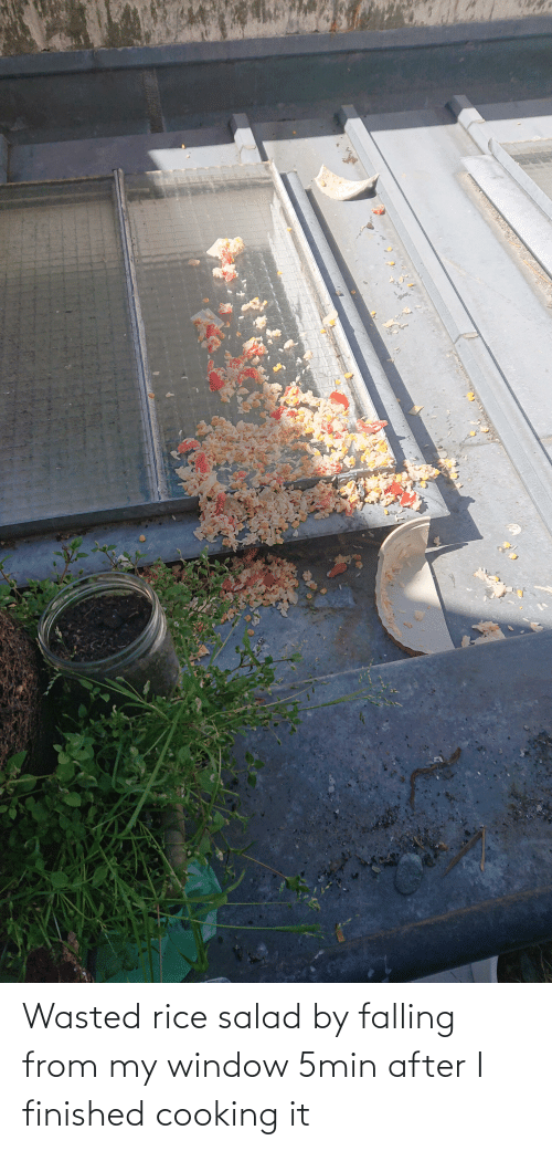 rice: Wasted rice salad by falling from my window 5min after I finished cooking it