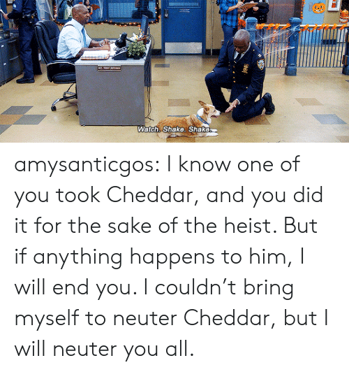 Target, Tumblr, and Blog: Watch: Shake. Shake amysanticgos:  I know one of you took Cheddar, and you did it for the sake of the heist. But if anything happens to him, I will end you. I couldn't bring myself to neuter Cheddar, but I will neuter you all.