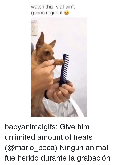 metadata: watch this, y'all ain't  gonna regret it babyanimalgifs: Give him unlimited amount of treats  (@mario_peca)   Ningún animal fue herido durante la grabación