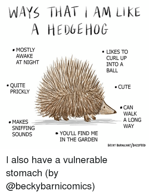 curl: WAYS THAT i AM LIKE  A HEDGEHOG  . MOSTLY  . LIKES TO  AWAKE  AT NIGHT  CURL UP  INTO A  BALL  .QUITE  CUTE  PRICKLY  . CAN  WALK  A LONG  WAY  . MAKES  SNIFFING  SOUNDS  e YOU'LL FIND ME  IN THE GARDEN  BECKY BARNICOAT/BUZzFEED I also have a vulnerable stomach (by @beckybarnicomics)