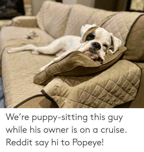 Popeye: We're puppy-sitting this guy while his owner is on a cruise. Reddit say hi to Popeye!