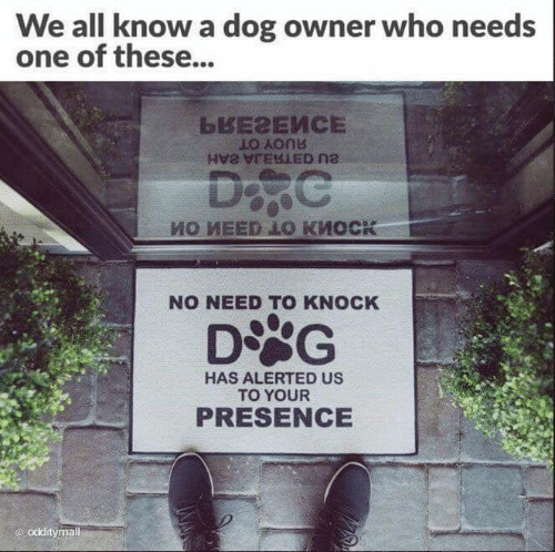 Dog Owner: We all know a dog owner who needs  one of these...  NO NEED TO KNOCK  DSG  HAS ALERTED US  TO YOUR  PRESENCE  odditymal