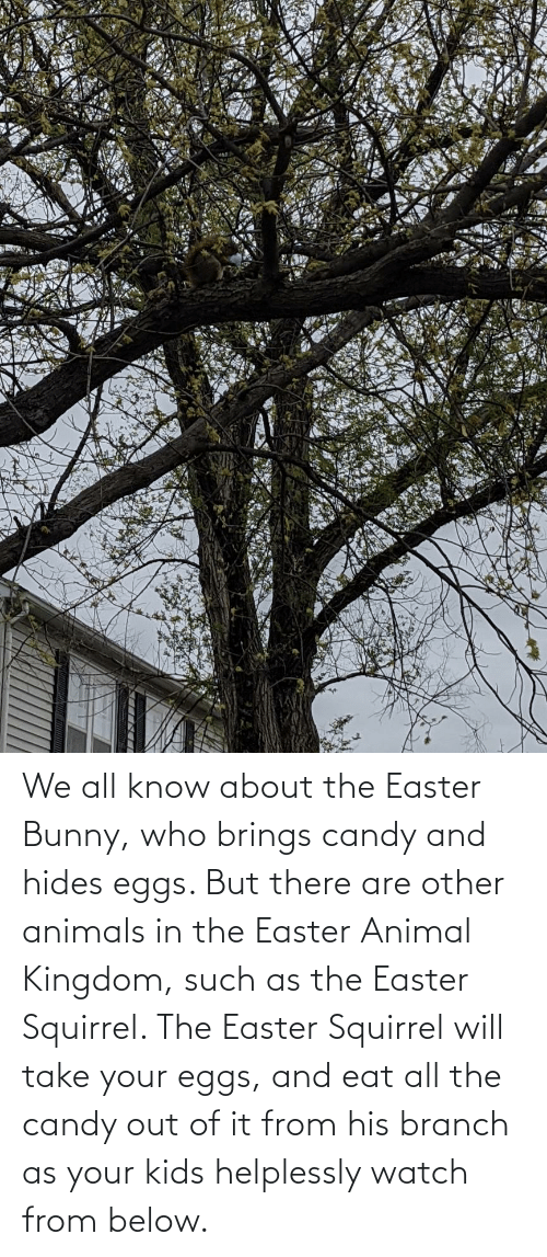 kingdom: We all know about the Easter Bunny, who brings candy and hides eggs. But there are other animals in the Easter Animal Kingdom, such as the Easter Squirrel. The Easter Squirrel will take your eggs, and eat all the candy out of it from his branch as your kids helplessly watch from below.