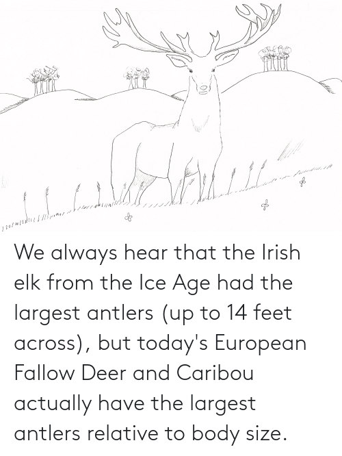 Deer: We always hear that the Irish elk from the Ice Age had the largest antlers (up to 14 feet across), but today's European Fallow Deer and Caribou actually have the largest antlers relative to body size.
