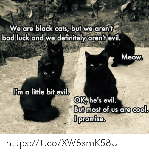 a little bit: We are black cats, but we aren't  bad luck and we definitely aren't evil.  Meow  Um a little bit evil  OK he's evil.  Butmost of us are cool  0promise. https://t.co/XW8xmK58Ui