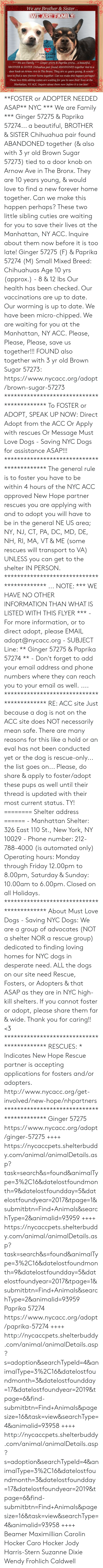 Fröhlich: We are Brother & Sister.  WE ARE FAMILY  US  TOGETH  PLEASE  We are Family  Ginger 57275 & Paprika 57274.. a beautiful,  BROTHER& SISTER Chihuahua pair found ABANDONED together tied to a  door knob on Arnow Ave in The Bronx. They are 10 years young, & would  love to find a new forever home together. Can we make this happen perhaps?  These two little sibling cuties are waiting for you to save their lives at theO  Manhattan, NY ACC. Inquire about them now before it is too late! **FOSTER or ADOPTER NEEDED ASAP** NYC *** We are Family *** Ginger 57275 & Paprika 57274... a beautiful, BROTHER & SISTER Chihuahua pair found ABANDONED together (& also with 3 yr old Brown Sugar 57273) tied to a door knob on Arnow Ave in The Bronx. They are 10 years young, & would love to find a new forever home together. Can we make this happen perhaps? These two little sibling cuties are waiting for you to save their lives at the Manhattan, NY ACC. Inquire about them now before it is too late!  Ginger 57275 (F) & Paprika 57274 (M) Small Mixed Breed: Chihuahuas Age 10 yrs (approx.) - 8 & 12 lbs Our health has been checked.  Our vaccinations are up to date. Our worming is up to date.  We have been micro-chipped.  We are waiting for you at the Manhattan, NY ACC.  Please, Please, Please, save us together!!!   FOUND also together with 3 yr old Brown Sugar 57273:  https://www.nycacc.org/adopt/brown-sugar-57273  ****************************************** To FOSTER or ADOPT, SPEAK UP NOW:  Direct Adopt from the ACC Or Apply with rescues Or Message Must Love Dogs - Saving NYC Dogs  for assistance ASAP!!! ******************************************  The general rule is to foster you have to be within 4 hours of the NYC ACC approved New Hope partner rescues you are applying with and to adopt you will have to be in the general NE US area; NY, NJ, CT, PA, DC, MD, DE, NH, RI, MA, VT & ME (some rescues will transport to VA) UNLESS you can get to the shelter IN PERSON.  ****************************