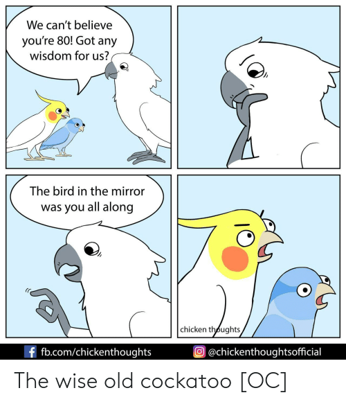 the bird: We can't believe  you're 80! Got any  wisdom for us?  The bird in the mirror  was you all along  chicken thoughts  f fb.com/chickenthoughts  @chickenthoughtsofficial The wise old cockatoo [OC]