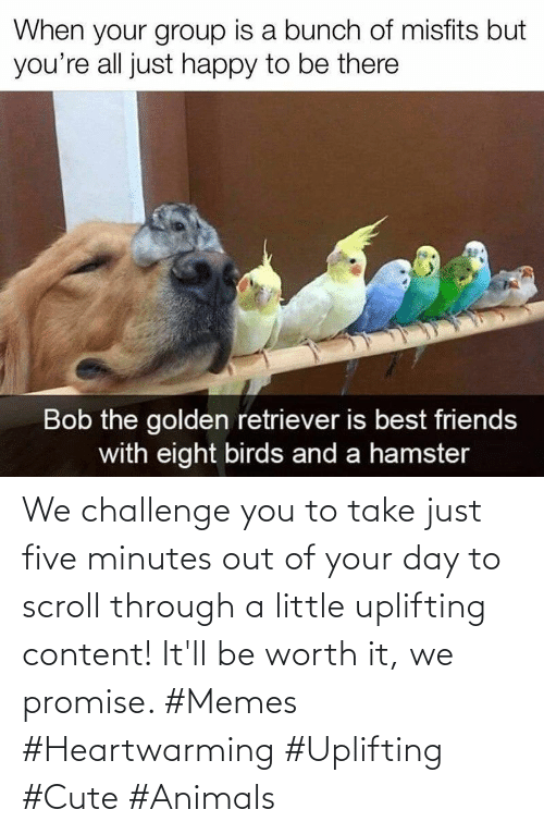 challenge: We challenge you to take just five minutes out of your day to scroll through a little uplifting content! It'll be worth it, we promise. #Memes #Heartwarming #Uplifting #Cute #Animals