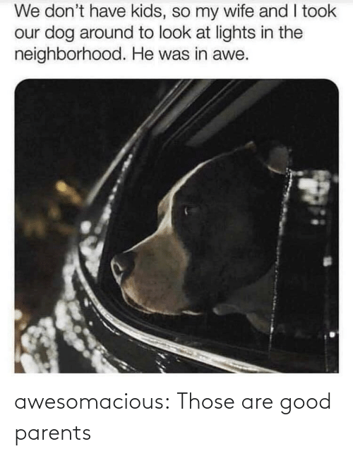 awe: We don't have kids, so my wife and I took  our dog around to look at lights in the  neighborhood. He was in awe. awesomacious:  Those are good parents