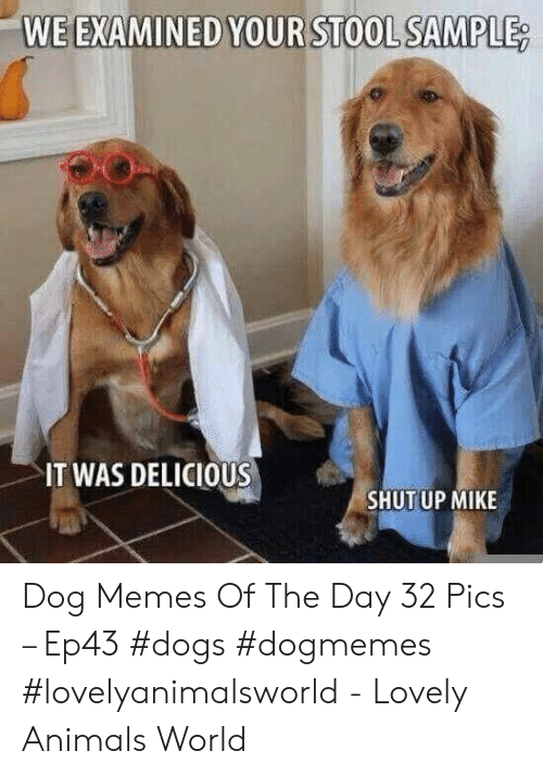 stool: WE EXAMINED YOUR STOOL SAMPLE  IT WAS DELICIOUS  SHUTUP MIKE Dog Memes Of The Day 32 Pics – Ep43 #dogs #dogmemes #lovelyanimalsworld - Lovely Animals World