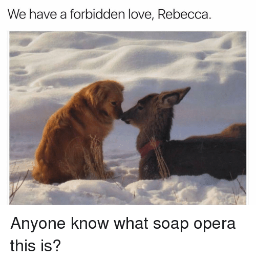 soap opera: We have a forbidden love, Rebecca. Anyone know what soap opera this is?