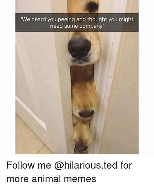 We Heard You: We heard you peeing and thought you might  need some company Follow me @hilarious.ted for more animal memes