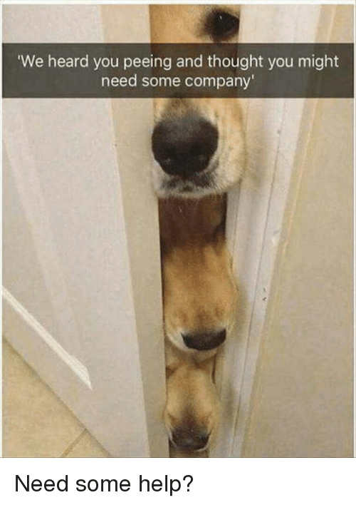 Memes, Help, and Thought: We heard you peeing and thought you might  need some company Need some help?