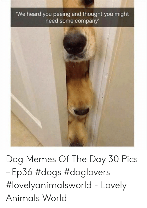 We Heard You: We heard you peeing and thought you might  need some company' Dog Memes Of The Day 30 Pics – Ep36 #dogs #doglovers #lovelyanimalsworld - Lovely Animals World