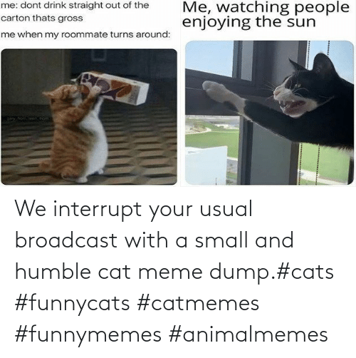 usual: We interrupt your usual broadcast with a small and humble cat meme dump.#cats #funnycats #catmemes #funnymemes #animalmemes