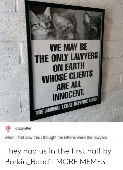 Dank, Memes, and Saw: WE MAY BE  THE ONLY LAWYERS  ON EARTH  WHOSE CLIENTS  ARE ALL  INNOCEVT  THE ANIMAL LEGAL DEFENSE FUND  dizzyotter  when i first saw this i thought the kittens were the lawyers They had us in the first half by Borkin_Bandit MORE MEMES