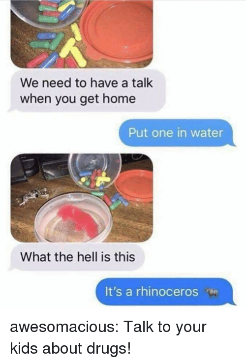 Drugs, Tumblr, and Blog: We need to have a talk  when you get home  Put one in water  What the hell is this  It's a rhinoceros awesomacious:  Talk to your kids about drugs!