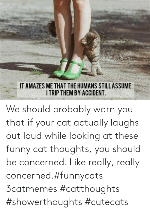 Should Probably: We should probably warn you that if your cat actually laughs out loud while looking at these funny cat thoughts, you should be concerned. Like really, really concerned.#funnycats 3catmemes #catthoughts #showerthoughts #cutecats