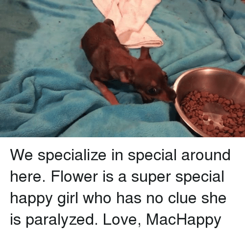 Paralyzation: We specialize in special around here. Flower is a super special happy girl who has no clue she is paralyzed.   Love, MacHappy