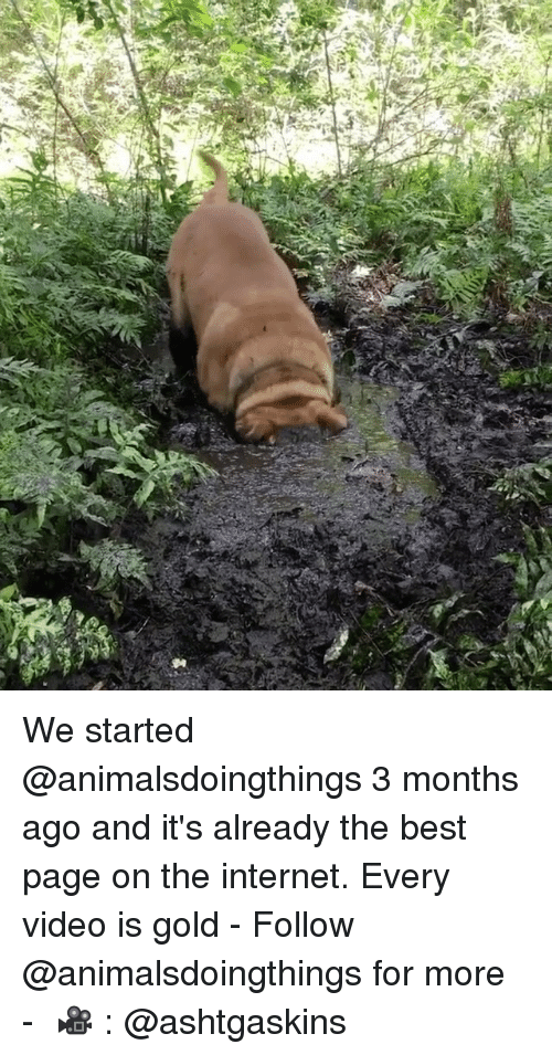 Internet, Best, and Video: We started @animalsdoingthings 3 months ago and it's already the best page on the internet. Every video is gold⠀ -⠀ Follow @animalsdoingthings for more⠀ -⠀ 🎥 : @ashtgaskins