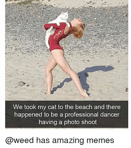 beached: We took my cat to the beach and there  happ  ened to be a professional dancer  having a photo shoot @weed has amazing memes