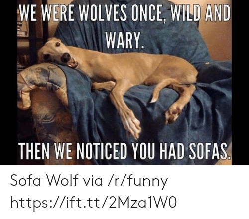 Funny, Wild, and Wolf: WE WERE WOLVES ONCE, WILD AND  WARY  THEN WE NOTICED YOU HAD SOFAS Sofa Wolf via /r/funny https://ift.tt/2Mza1W0