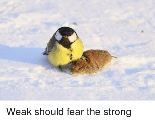 Strong, Fear, and  Weak: Weak should fear the strong