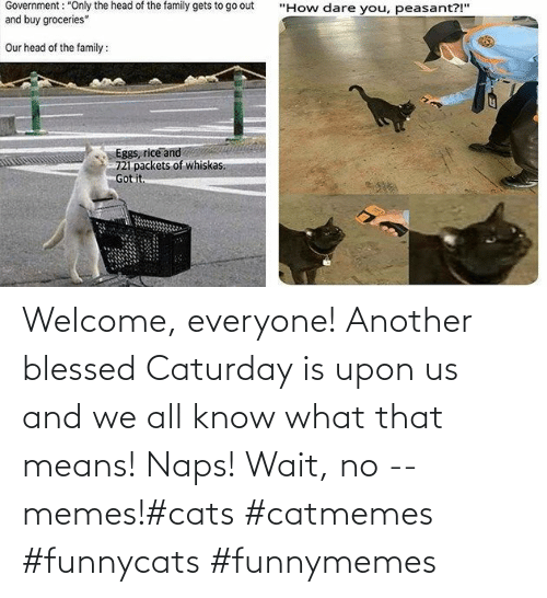 Upon: Welcome, everyone! Another blessed Caturday is upon us and we all know what that means! Naps! Wait, no -- memes!#cats #catmemes #funnycats #funnymemes