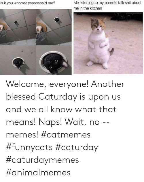 everyone: Welcome, everyone! Another blessed Caturday is upon us and we all know what that means! Naps! Wait, no -- memes! #catmemes #funnycats #caturday #caturdaymemes #animalmemes