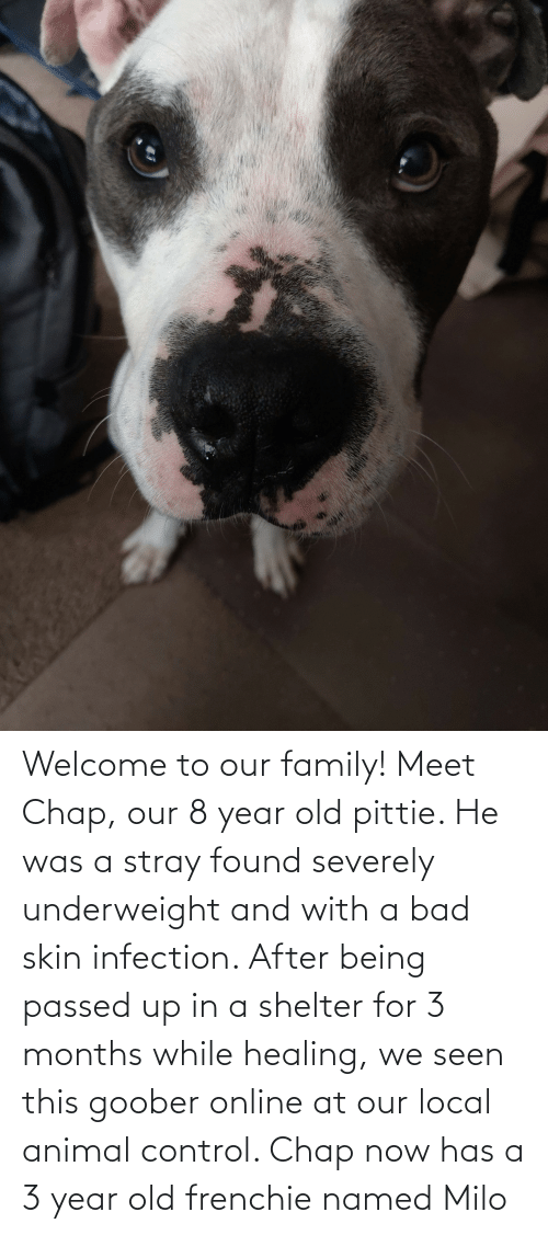 goober: Welcome to our family! Meet Chap, our 8 year old pittie. He was a stray found severely underweight and with a bad skin infection. After being passed up in a shelter for 3 months while healing, we seen this goober online at our local animal control. Chap now has a 3 year old frenchie named Milo