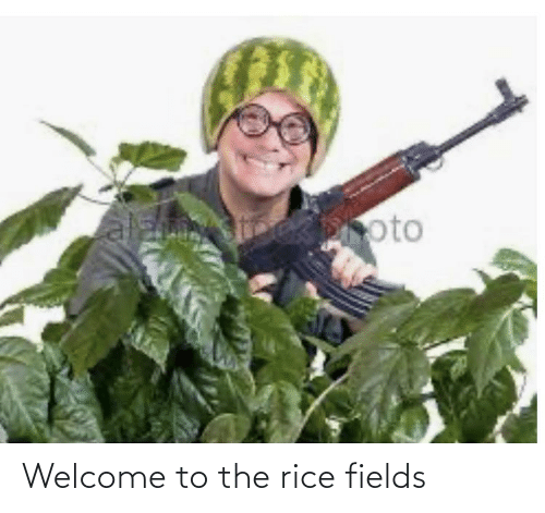 rice: Welcome to the rice fields