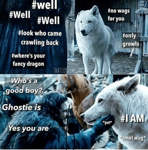 Game of Thrones, Fancy, and Good:  #well,  #no wags  #Well #Well  for you  #look who came  #only  crawling back  growls  #where's your  fancy dragon  THATLOSA A  Who's a  good boy?  Ghostie is  pat AM  *pat*  Yes you are  smol wag*