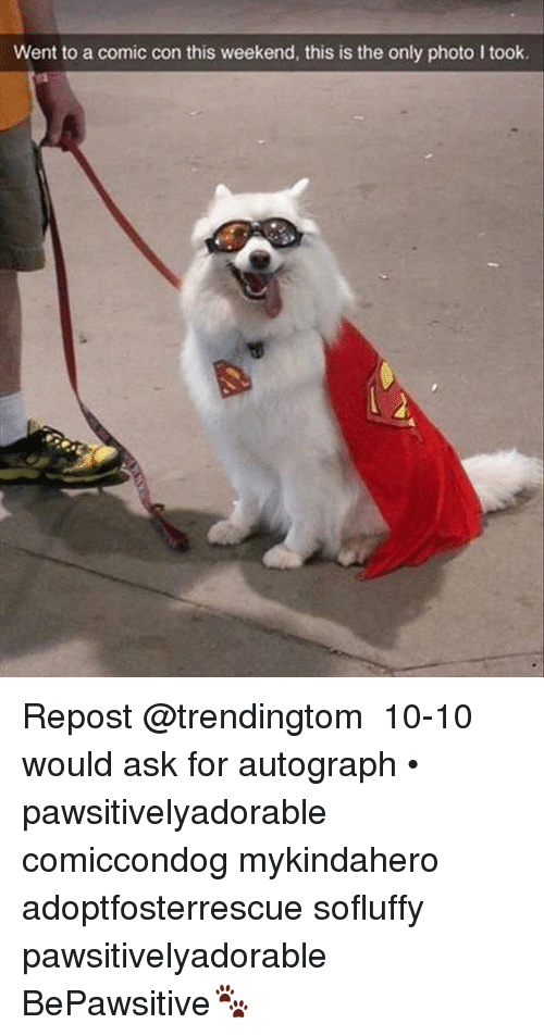 autographed: Went to a comic con this weekend, this is the only photo I took. Repost @trendingtom ・・・ 10-10 would ask for autograph • pawsitivelyadorable comiccondog mykindahero adoptfosterrescue sofluffy pawsitivelyadorable BePawsitive🐾