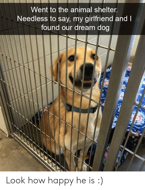 Animal, Animal Shelter, and Happy: Went to the animal shelter  Needless to say, my girlfriend and  found our dream dog Look how happy he is :)