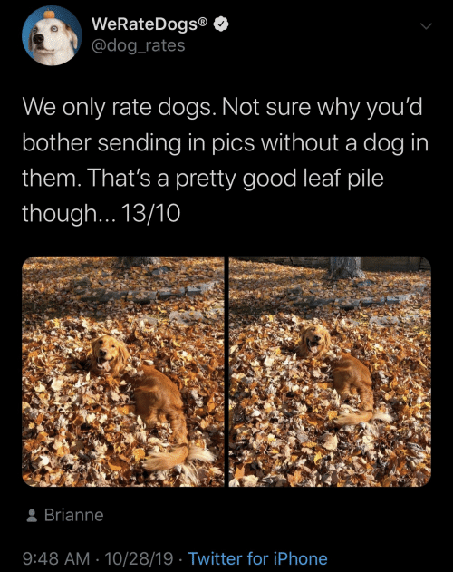 A Dog: WeRateDogs®  @dog_rates  We only rate dogs. Not sure why you'd  bother sending in pics without a dog in  them. That's a pretty good leaf pile  though... 13/10  8 Brianne  9:48 AM · 10/28/19 · Twitter for iPhone