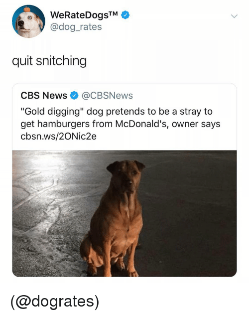 "McDonalds, News, and Cbs: WeRateDogsTM  @dog_rates  quit snitching  CBS News@CBSNews  ""Gold digging"" dog pretends to be a stray to  get hamburgers from McDonald's, owner says  cbsn.ws/2ONic2e (@dogrates)"