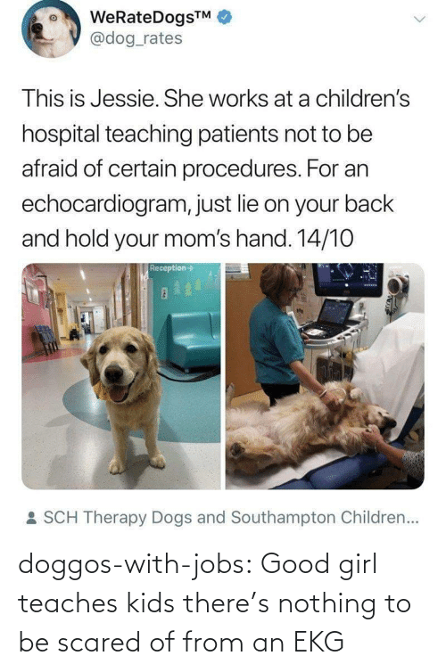 Hospital: WeRateDogsTM  @dog_rates  This is Jessie. She works at a children's  hospital teaching patients not to be  afraid of certain procedures. For an  echocardiogram, just lie on your back  and hold your mom's hand. 14/10  Reception->  : SCH Therapy Dogs and Southampton Children... doggos-with-jobs:  Good girl teaches kids there's nothing to be scared of from an EKG