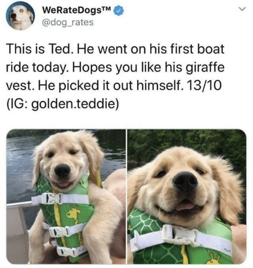 Dank, Ted, and Giraffe: WeRateDogsTM  @dog_rates  This is Ted. He went on his first boat  ride today. Hopes you like his giraffe  vest. He picked it out himself. 13/10  (IG: golden.teddie)  CO