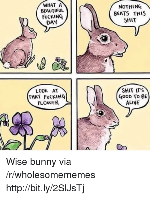 Fucking Day: WHAT A  BEAUTIFUL  FUCKING  DAY  NOTHING  BEATS THIS  SHIT  SHIT ITS  LOOK AT  THAT FuCKING  FLOWER  G00D To BE  ALIVE Wise bunny via /r/wholesomememes http://bit.ly/2SlJsTj