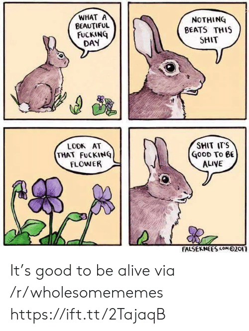 Fucking Day: WHAT A  BEAUTIFUL  FUCKING  DAY  NOTHING  BEATS THIS  SHIT  SMIT ITS  LOOK AT  THAT FuCKINQ  FLOWER  GooD To eE  ALIVE  FALSEKNEES com 02or It's good to be alive via /r/wholesomememes https://ift.tt/2TajaqB