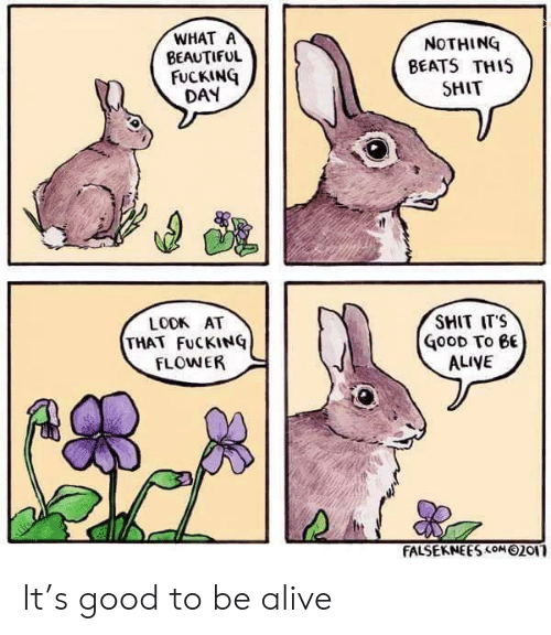 Fucking Day: WHAT A  BEAUTIFUL  FUCKING  DAY  NOTHING  BEATS THIS  SHIT  SMIT ITS  LOOK AT  THAT FuCKINQ  FLOWER  GooD To eE  ALIVE  FALSEKNEES com 02or It's good to be alive